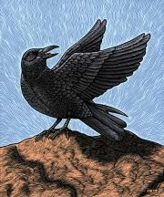 RavenPu