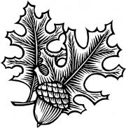 Acorn-Oakleaves