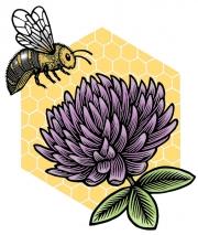 HoneybeeCloverPu