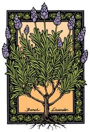LavenderPu