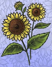 SunflowerPu