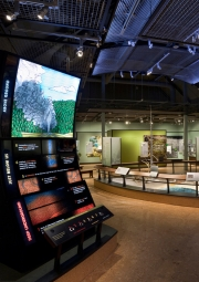 Yellowstone Park Visitors Center